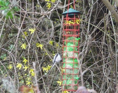 http://sd3.archive-host.com/membres/images/1336321151/bestioles/oiseaux/Home/0.jpg