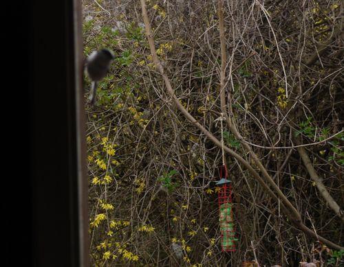 http://sd3.archive-host.com/membres/images/1336321151/bestioles/oiseaux/Home/2.jpg