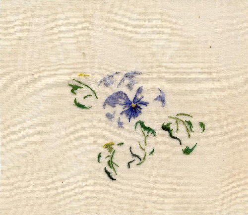 http://sd3.archive-host.com/membres/images/1336321151/fleurs/Viola_gaze/gaze-B.jpg