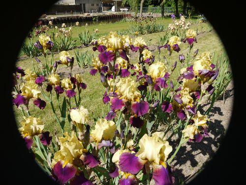 http://sd3.archive-host.com/membres/images/1336321151/fleurs/iris/tecomah/manoir_de_la_salle.jpg