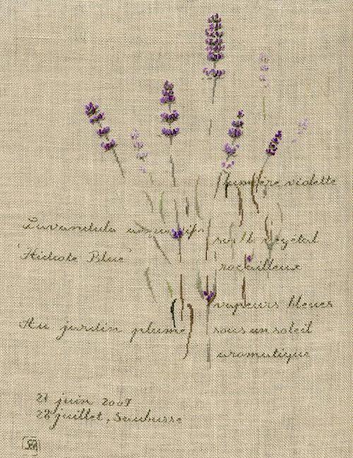 http://sd3.archive-host.com/membres/images/1336321151/fleurs/lavande/hidcote/hidcote_blue-B.jpg