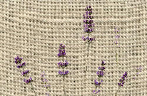 http://sd3.archive-host.com/membres/images/1336321151/fleurs/lavande/hidcote/hidcote_blue-GP.jpg